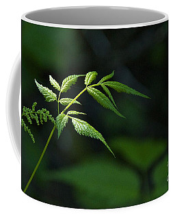 A Light In The Forest Coffee Mug