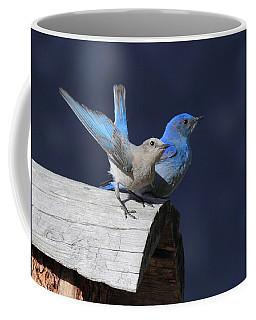 A Pair Of Bluebirds Coffee Mug