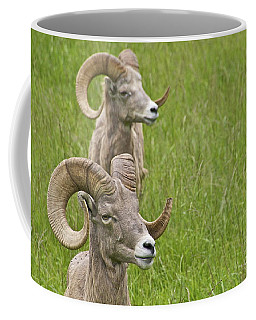 Coffee Mug featuring the photograph A Pair Of Rams by Sean Griffin