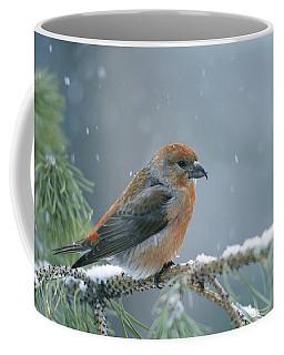 A Red Crossbill Loxia Curvirostra Coffee Mug