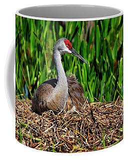 A Sandhill Crane Nesting Coffee Mug