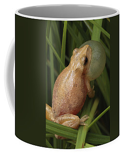 A Spring Peeper Calls For A Mate Coffee Mug