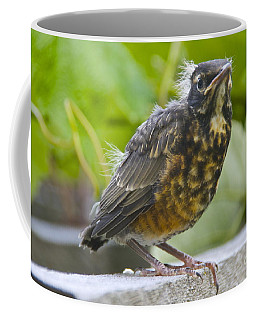 Coffee Mug featuring the photograph Accidental Fledgling 2 by Sean Griffin