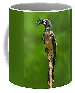 African Grey Hornbill Coffee Mug
