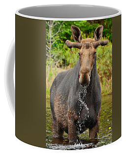 Algonquin Bull Coffee Mug