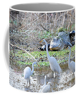 Coffee Mug featuring the photograph Alligator Looking For Food by Dan Friend
