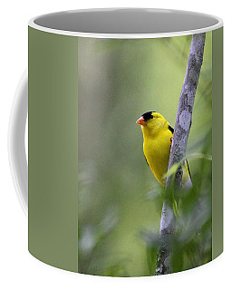 American Goldfinch - Peaceful Coffee Mug