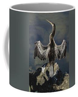 An American Anhinga Dries Its Wings Coffee Mug