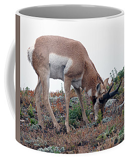 Coffee Mug featuring the photograph Antelope Grazing by Art Whitton