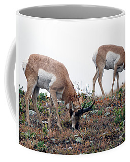 Coffee Mug featuring the photograph Antelopes Grazing by Art Whitton