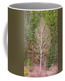 Aspen Tree Forest Road 249 Coffee Mug