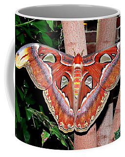 Atlas Moth Coffee Mug by Kevin Fortier