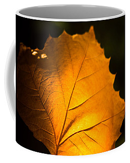 Autumn Light Coffee Mug by Sara Frank