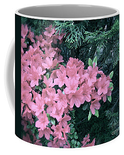 Coffee Mug featuring the photograph Azaleas And Evergreens  by Nancy Patterson