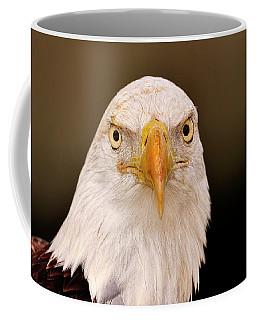Bald Eagle Looking In Coffee Mug