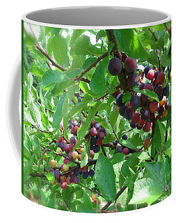 Coffee Mug featuring the photograph Beach Plums  by Nancy Patterson