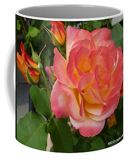 Coffee Mug featuring the photograph Beautiful Rose With Buds by Lingfai Leung