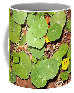 Beautiful Round Green Leaves Of A Plant With Orange Flowers Coffee Mug