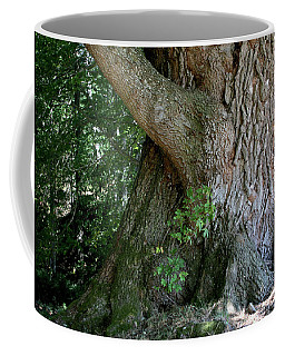 Big Fat Tree Trunk Coffee Mug