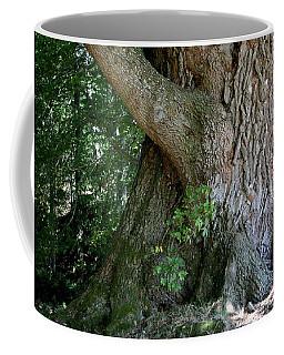 Big Fat Tree Trunk Coffee Mug