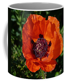 Coffee Mug featuring the photograph Big Red Poppy by Lynn Bolt