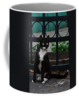 Black Cat On Black Background Coffee Mug