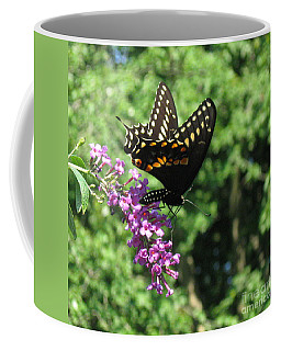 Black Swallowtail Butterfly  Coffee Mug by Nancy Patterson