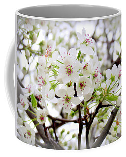 Coffee Mug featuring the photograph Blooming Ornamental Tree by Kay Novy