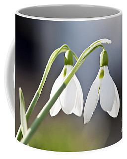 Coffee Mug featuring the photograph Blooming Snowdrops by Elena Elisseeva