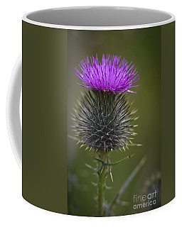 Blooming Thistle Coffee Mug by Clare Bambers