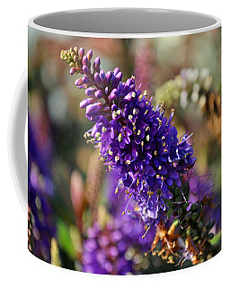 Coffee Mug featuring the photograph Blue Brush Bloom by Tikvah's Hope
