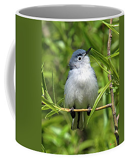Coffee Mug featuring the photograph Blue-gray Gnatcatcher Dsb147 by Gerry Gantt
