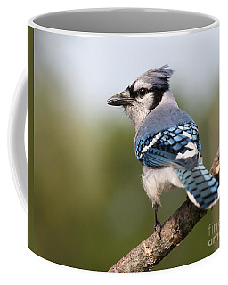 Coffee Mug featuring the photograph Blue Jay by Art Whitton