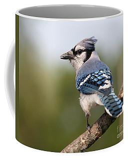 Blue Jay Coffee Mug by Art Whitton