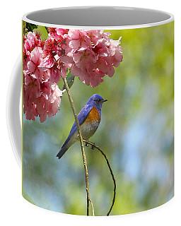 Bluebird In Cherry Tree Coffee Mug