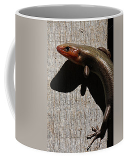 Broad-headed Skink On Barn  Coffee Mug