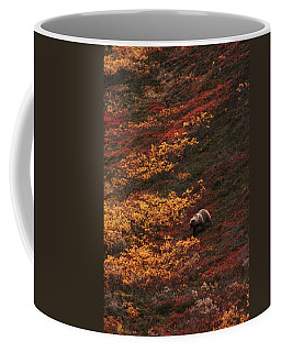 Brown Bear Denali National Park Coffee Mug