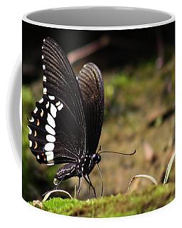 Coffee Mug featuring the photograph Butterfly Feeding  by Ramabhadran Thirupattur