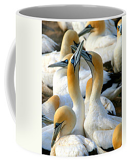 Cape Gannet Courtship Coffee Mug