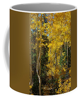 Coffee Mug featuring the photograph Changing Seasons by Vicki Pelham