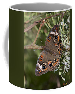 Common Buckeye Butterfly Din182 Coffee Mug