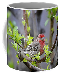 Coffee Mug featuring the photograph Content by Nava Thompson