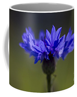 Coffee Mug featuring the photograph Cornflower Blue by Clare Bambers