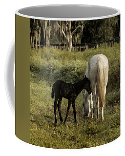 Cracker Foal And Mare Coffee Mug