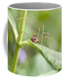Creepy Crawly Spider Coffee Mug