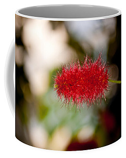 Coffee Mug featuring the photograph Crimson Bottle Brush by Tikvah's Hope