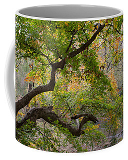 Crooked Limb Coffee Mug