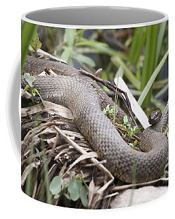 Coffee Mug featuring the photograph Cuddling Snakes by Jeannette Hunt