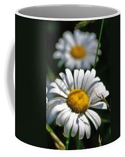 Daisies Aglow Coffee Mug