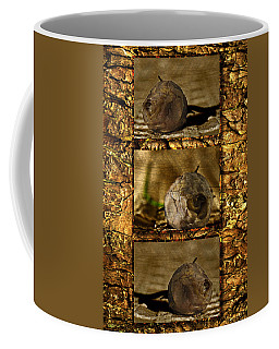 Coffee Mug featuring the photograph Dead Rosebud Triptych by Steve Purnell